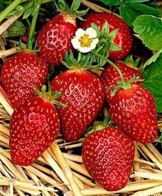 Korona Strawberries