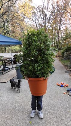 Shrub (Bush, Plant) costume- Dawson is going to be a bush----yes and that is so he can jump out and scare our trick or treaters. Flower Pot Costume, Diy Halloween Costumes, Costume Ideas, Halloween 2017, Halloween Stuff, Halloween Ideas, Homemade Halloween, Halloween Party, Halloween Decorations