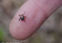 The largest survey of ticks and tick-borne disease to be carried out in the UK…