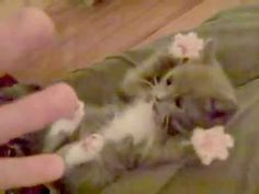 """The Most Adorable Video of a Kitten I've Ever Seen!! """"The Kitty Peek-A-Boo"""""""