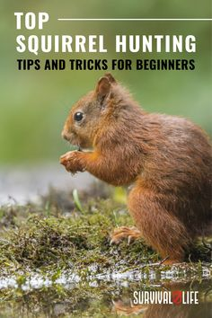 Ace squirrel hunting by learning the top tips such as squirrel calling or movement and more as you continue reading. #squirrelhunting #smallgame #smallgamehunting #huntingtips #hunting #survival #preparedness #survivallife Squirrel Calls, Squirrel Hunting, Survival Life, Survival Skills, Outdoor Shelters, Hunting Tips, Safety Tips, Emergency Preparedness, Learning