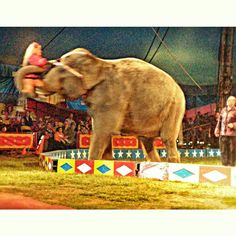 Elephant spin, Cole Brothers Circus  Photo:  @realmaryz