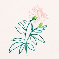 Camellia by Liana Jegers (This print is sold out.) - A branch of camellia, originally drawn in colored pencil on paper. Plant Illustration, Floral Illustrations, Sketch Book, Drawings, Drawing Illustrations, Watercolor Print, Illustration Art, Flower Drawing, Art