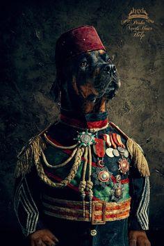 BGD Stray Animals Foundation: Pasha | Ads of the World | We Heart It
