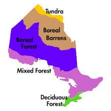 Protecting and recovering species at risk and their habitat is a key part of conserving Ontario's biodiversity. Find out what Ontario is doing and how you can help. American Chestnut, Black Gums, The Province, Habitats, Ontario, Google Search, Image, Rome