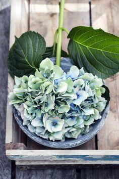 Interieur inspiratie | Gek op Hortensia's - Stijlvol Styling woonblog www.stijlvolstyling.com