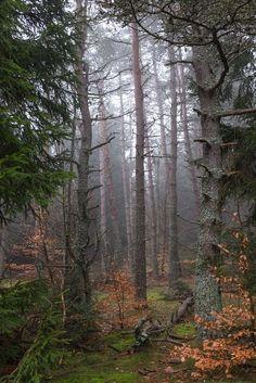 accio-forest: Brume by Benoît Rocher❤️
