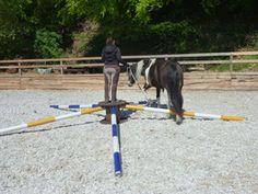 Fördert die Koordination und Konzentration des Pferdes. Für weitere Info's besucht meine Homepage www.pferdetraining-mit-gefuehl.ch