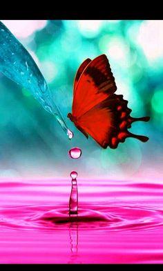 Butterfly on a pink flower Wallpaper Butterflies Animals Wallpapers) – Wallpapers HD Papillon Butterfly, Butterfly Kisses, Butterfly Flowers, Purple Butterfly, Monarch Butterfly, Butterfly Wings, Beautiful Bugs, Beautiful Butterflies, Beautiful Things