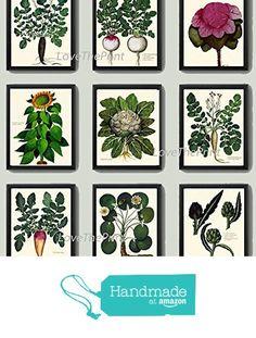Vegetable Print Set of 9 Prints Antique Beautiful Sunflower Water lily Artichoke Radish Cabbage Green Vegeterian Garden Nature Home Room Decor Wall Art Unframed from LoveThePrint http://www.amazon.com/dp/B018SWAUE2/ref=hnd_sw_r_pi_dp_-TGxwb0DK8A1B #handmadeatamazon