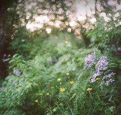 by wildorange55 on Flickr.