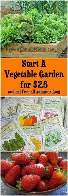 For 25 you can build a raised bed vegetable garden WITH plants and grow enough food to make back your money in no time backyard garden # Vegetable Garden Planner, Starting A Vegetable Garden, Backyard Vegetable Gardens, Fruit Garden, Vegetable Ideas, Potager Garden, Greenhouse Gardening, Apartment Vegetable Garden, Vegetable Design