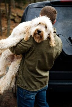 Teddy B. ~ Goldendoodle He's so adorable!