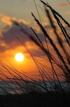 Sunset- great starting photo for a painting! Amazing Sunsets, Beautiful Sunset, Amazing Nature, Sunset Photography, Creative Photography, Landscape Photography, Sunset Wallpaper, Nature Wallpaper, Nature Pictures