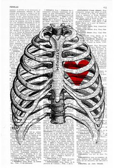 *  Rib Cage- Anatomy Art ~ by PRRINT *