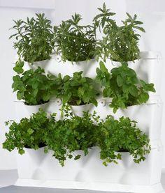 Huerto de hierbas aromáticas en la cocina