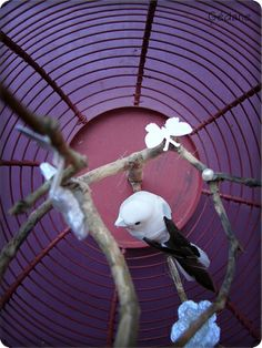 bird cage cage oiseau on pinterest birds deco and little birds. Black Bedroom Furniture Sets. Home Design Ideas