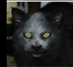 Black Dark Cat