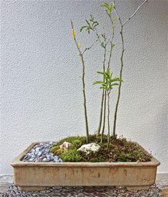 AROBE CERÁMICA, maceta para bonsai, gres esmaltado.