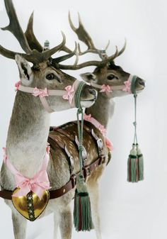 The reindeer get all dressed up in bows for a pink Christmas! Merry Little Christmas, Noel Christmas, Pink Christmas, All Things Christmas, Winter Christmas, Vintage Christmas, Reindeer Christmas, Merry Xmas, Reindeer Photo