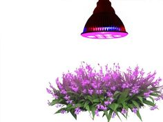 TaoTronics® E27 12W Led Grow Light TT-GL20 Red Blue LED Lights for Plants in Garden Greenhouse TaoTronics http://www.amazon.com/dp/B00GNWK2XO/ref=cm_sw_r_pi_dp_dx3yub184V151