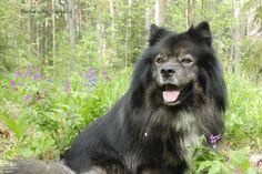 One happy lappy:) My Photos, Happy, Dogs, Animals, Animales, Animaux, Pet Dogs, Ser Feliz, Doggies