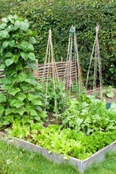 Have Fun In Your Veggie Garden with a Bean Teepee.  Want to enjoy healthy, home grown produce that is simple to plant and harvest?  Follow these easy How to Make a Bean Teepee instructions.  Beans are so easy to grow that the little ones in your home can join in the fun and help out, producing a bumper crop that's a delicious on your table or eaten right off the vine.