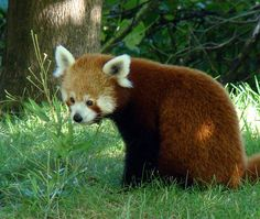 Red panda...and your name was?