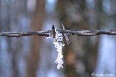 """""""Die meisten Menschen glauben, dass die besonders großen Schneeflocken die schönsten sind; sie sind groß genug, dass wir mit bloßem Auge etwas von ihrer Schönheit erkennen können. In Wahrheit aber sind sie meist unvollkommen. Die eindrucksvollsten Eiskristalle sind die kleinsten."""" Wilson A. Bentley, Eisfotograf, 1925"""