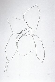 "Ellsworth Kelly, ""Cyclamen II"" 1964-65. Transfer lithographs.  As a Color Field painter, Kelly was a leader of the Hard-Edge school, using sparse composition in which there was no foreground, background, or figuration.  In his later works, he has explored shaped and adjoining canvases.  Kelly has also investigated purity, form and shape through his celebrated prints and drawings of plants and leaves."