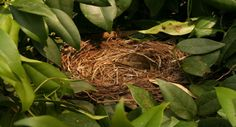 Helpful Tips for Empty Nest Moms