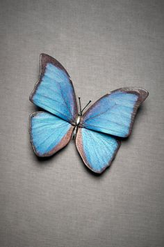 blue butterfly pin $220