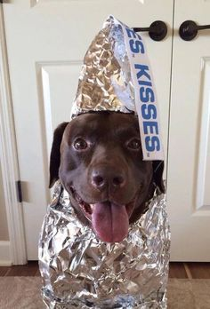Love this!  Of my many Chocolate Labs..of course I had one named Hershey!
