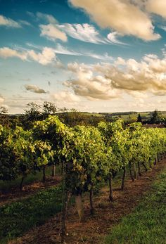 Wine Vineyards, Monuments, Places To Travel, Places To See, Bordeaux Vineyards, French Wine Regions, Aquitaine, Saint Emilion, France