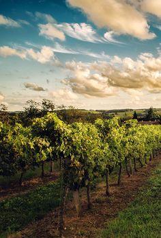 Aquitaine, #vineyard France