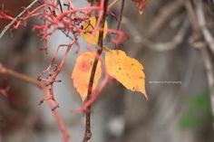 Leaves in Fall <3