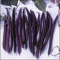 Purple pod pole beans- heirloom