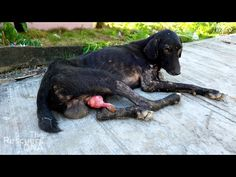Pascal was rescued three months ago in Turkey. He was drowned in glue for fun. His story went viral all over the world. Two days ago Pascal travelled to Spai...