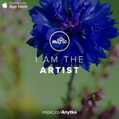 Check out my #miPic gallery and own my pics as awesome products! via @mipic_app  #flowers #cornflower #centaurea #blue #macro #herbs #plants #blossom #botany #naturelovers #summer