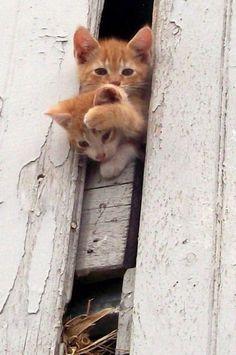 Adorable farm cats having fun !