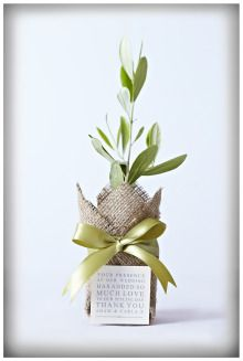 Plant bomboniere ... what a beautiful idea. Nosaltres t'oferim les oliveres i tu les decores com vols. http://viulolivera.com