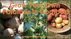 Sew Crafty Angel: Grow Your Own Potatoes in Compost