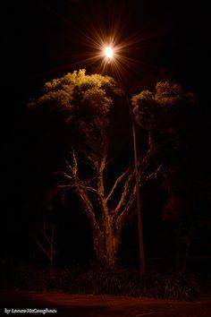 Tree Under Light 01