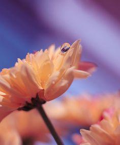 24 Beautiful Flower Photography
