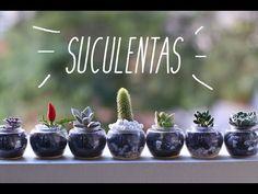DIY: Reaproveitando pods e plantando suculentas! *Decoração