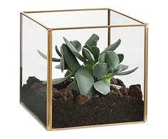 philodendron xanadu plante ikea potteplanter pinterest achat et d co. Black Bedroom Furniture Sets. Home Design Ideas