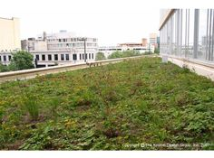 Green Roof on Minneapolis Public Library