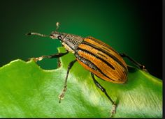How to ask the right questions to find the right South Pasadena pest control company without struggling with having pest issues in your home  http://www.pasadenabestpestcontrol.com  Would it be alright with you to stop struggling with having pest issues in your home?  If you want to know how to ask the right questions to find the right South Pasadena pest control company without the struggle lets do it  Below you will uncover ONE important thing. You will learn  Here is 1 Tip to help you be…