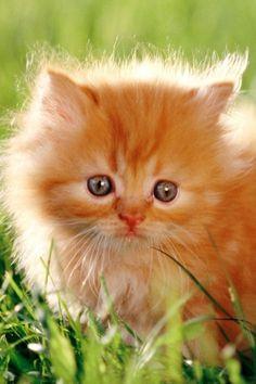 I Am Cute,Right? | Cutest Paw