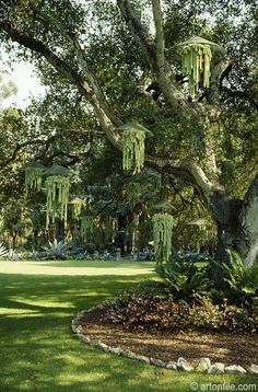 Burro Tail tree with hanging succulents on main lawn